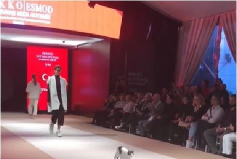 VIDEO | Kodutu kass röövis moesõul publiku tähelepanu