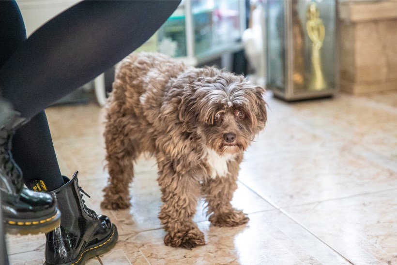 PEHME JA KARVANE | Inna Uit hoolitseb 27 looma-linnu eest: need ei ole inimesed, kes loomad kodust välja viskavad!