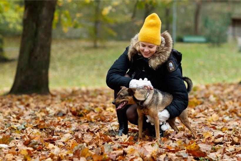 """PEHME JA KARVANE   Katrin Lust: inimesed, ärge ostke koertevabrikust 2000-euroseid """"kõndivaid käekotte"""""""