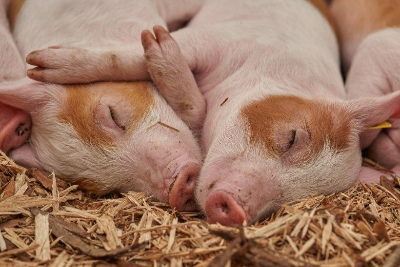 Talunik: hakkasin veganiks, et teha midagi loomade heaks