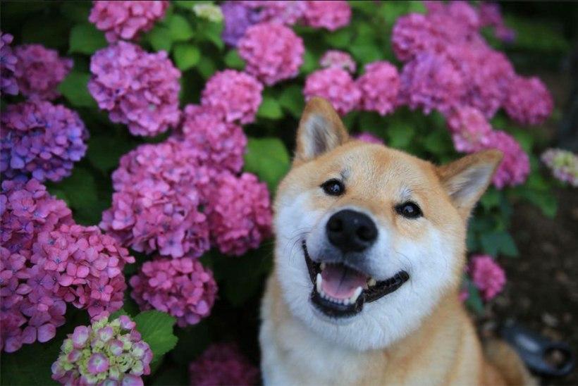 VIDEO | SPORDINÄDALA TOP3: Suure ringi küsimus ehk Mitu koera tõstaks Mart Seim pea kohale?