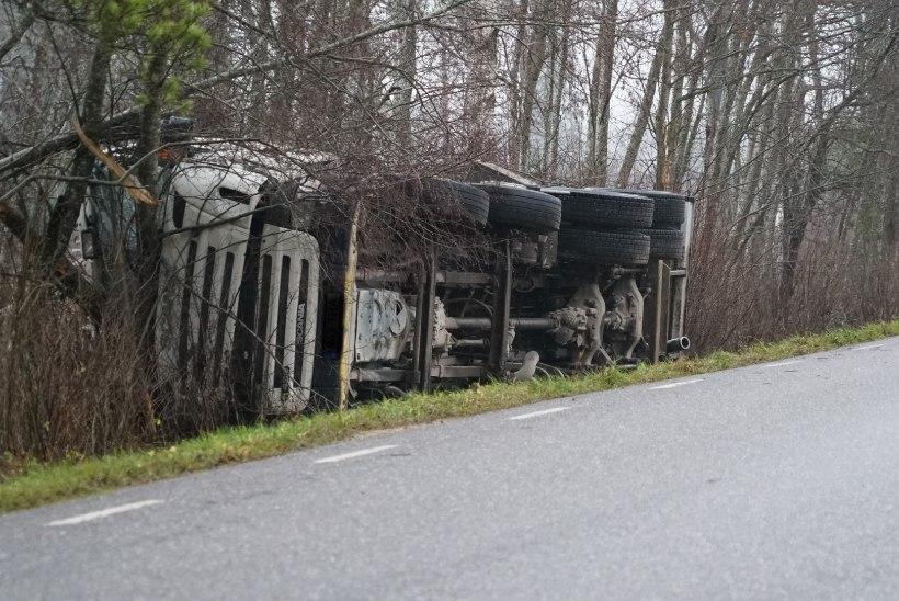 FOTOD | TEINE SÜNNIPÄEV: veoki kabiini tunginud pirakas puu säästis autojuhti