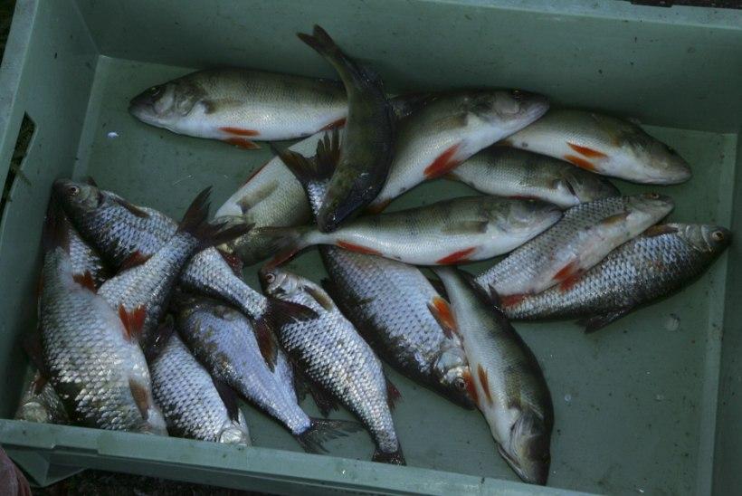 Kontrollkaalu jõkke visanud kalur sattus politsei uurimise alla