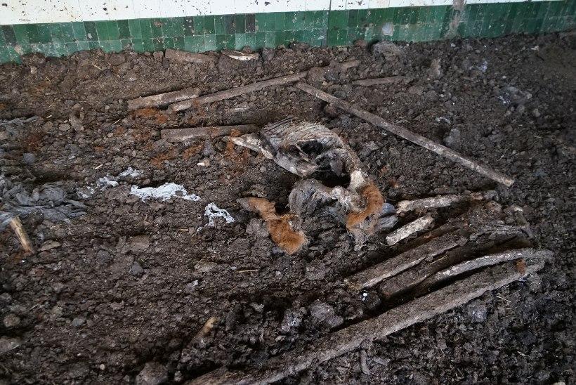 Laudast loomakorjused leidnud jahimees: see pilt oli nii kohutav, et pani mind hüppama!