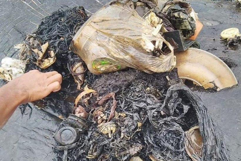 Kaldale uhutud surnud valaskala kõhust leiti 115 plasttopsi