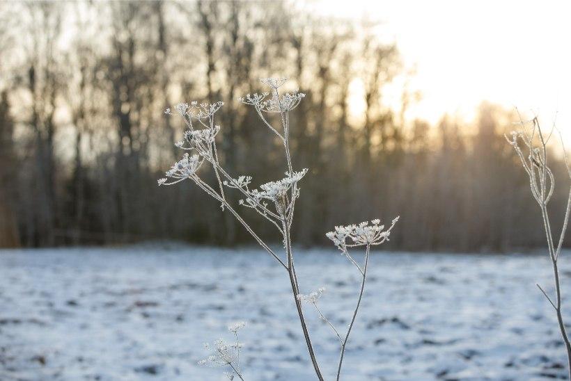 Nädala teises pooles võib sadada lörtsi ja lund