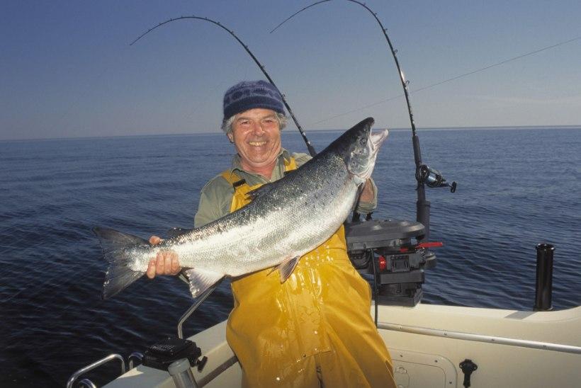 UURING: Läänemere kalades sisalduvad keskkonnamürgid on inimesele ohtlikumad, kui seni on arvatud