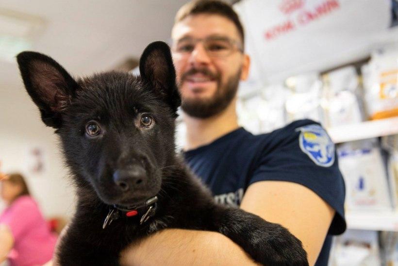 FOTO | Saage tuttavaks: Eesti politsei kõige noorem liige, kahekuune Glock