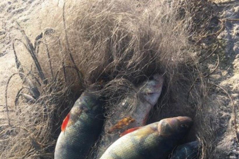 2019. aastal saavad harrastajad Matsalu rahvuspargis senisest rohkem kala püüda