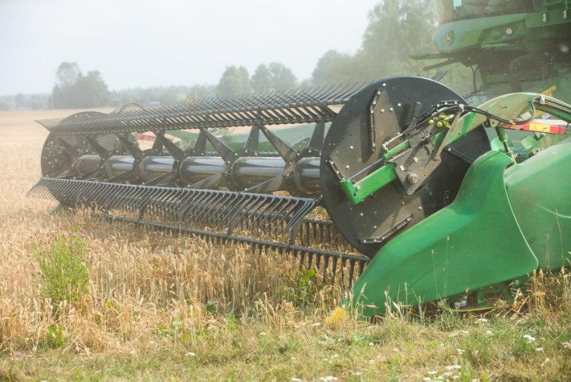 MIS TOIMUB? Maailmas ületab vilja tarbimine tootmist, Eestis saak mullusest halvem