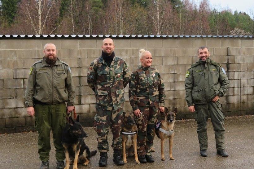 Leedu piirivalvekoer aitas leida Võrumaal metsa eksinud proua