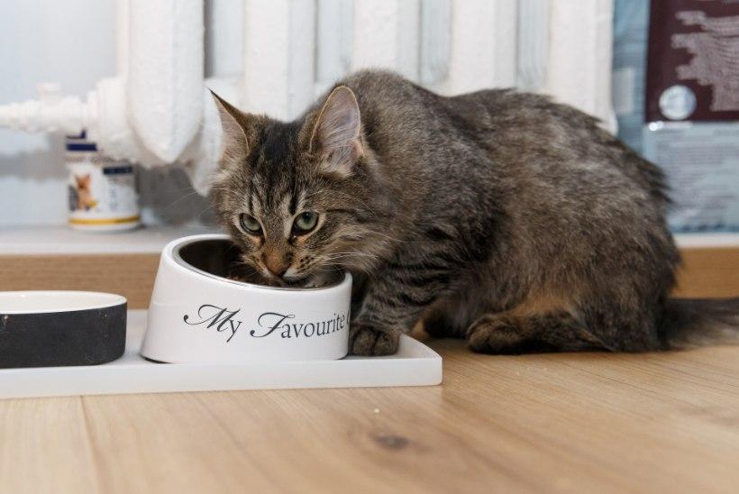 PEHME JA KARVANE | Merilin Taimre: kass on absoluutselt mu kõige lemmikum loom. Mulle öeldakse, et ma olen isegi nagu kiisu!
