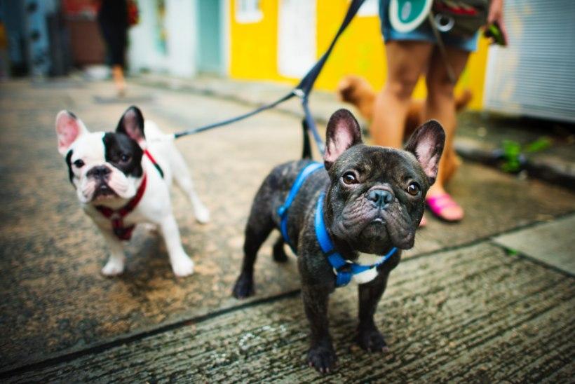 TOO KOER MAJJA! 8 olulist põhjust, miks koeraomanikud on teistest õnnelikumad ja tervemad