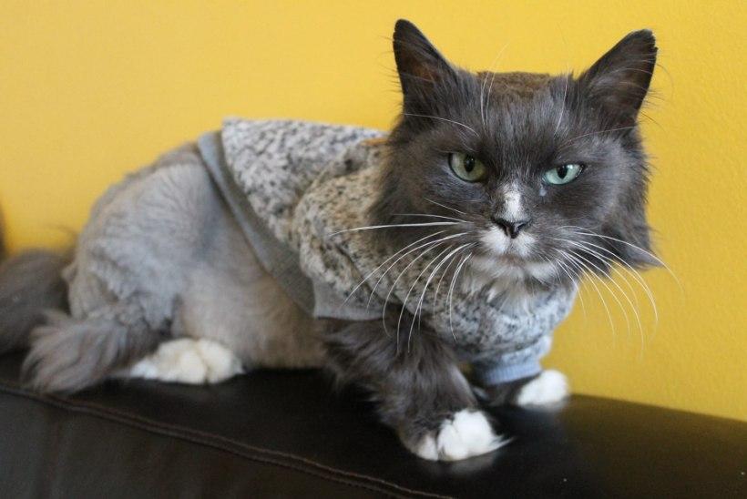 JÕULURÕÕMU: Nurri - kass, kes seikles Raplast Tallinnasse