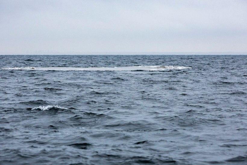 GALERII | Miinituukrid lõhkasid Naissaare lähistel seitse mürsku