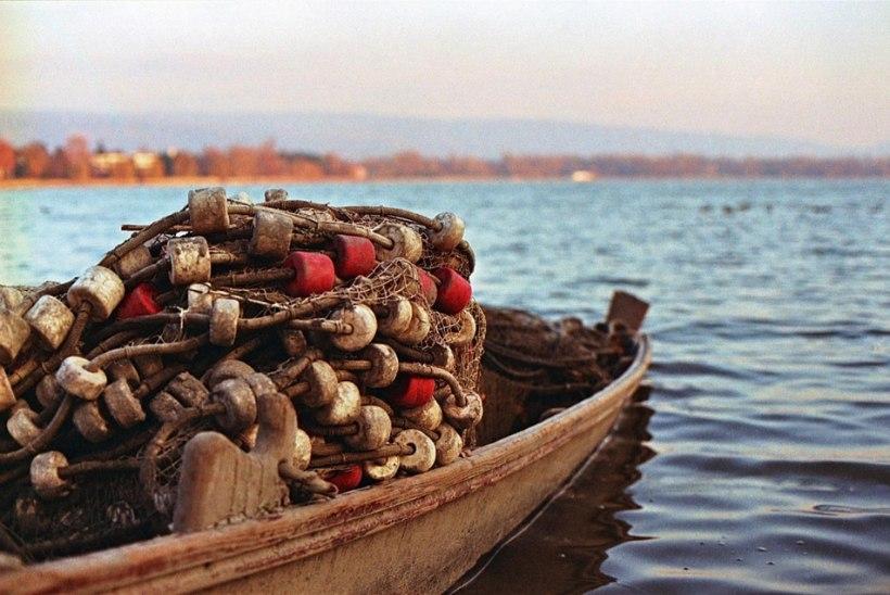 Muuseumid uurivad ühiselt kalandust