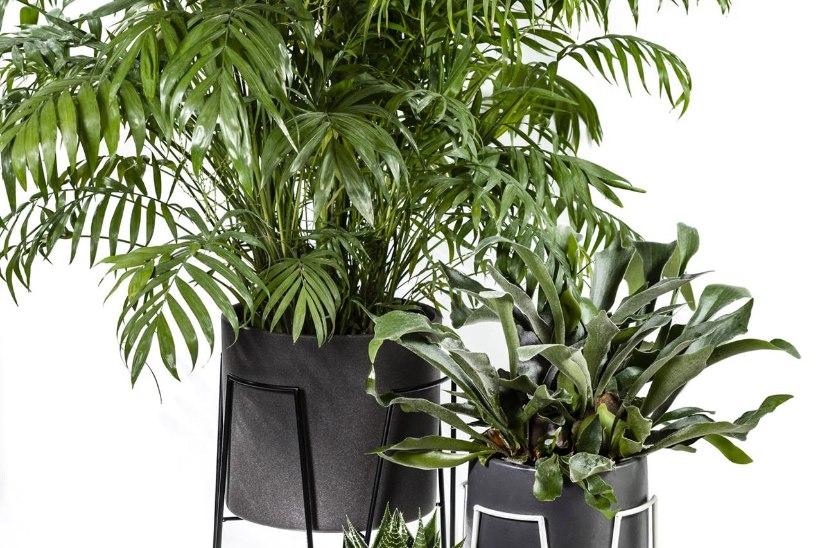 Mööbel taimedele ehk Lillepostamentide võidukäik
