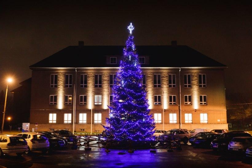 GALERII | Oh, jõulupuu, oh, jõulupuu – siit igaüks saab rõõmu!