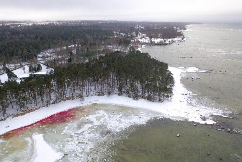 GALERII | Meri muutus veiniks?! Suurupis värvus rannaäär punaseks