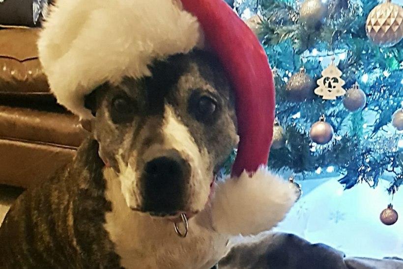 Kaheksa aastat varjupaigas veetnud koer sai viimaks oma kodu