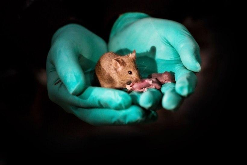 TEADUSAASTA 2018: jahmatavad geenikatsed ja suured läbimurded meditsiinis