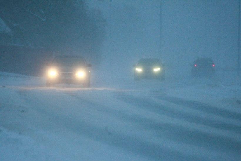 Taimi Paljak: maha sadanud lumi püsima ei jää