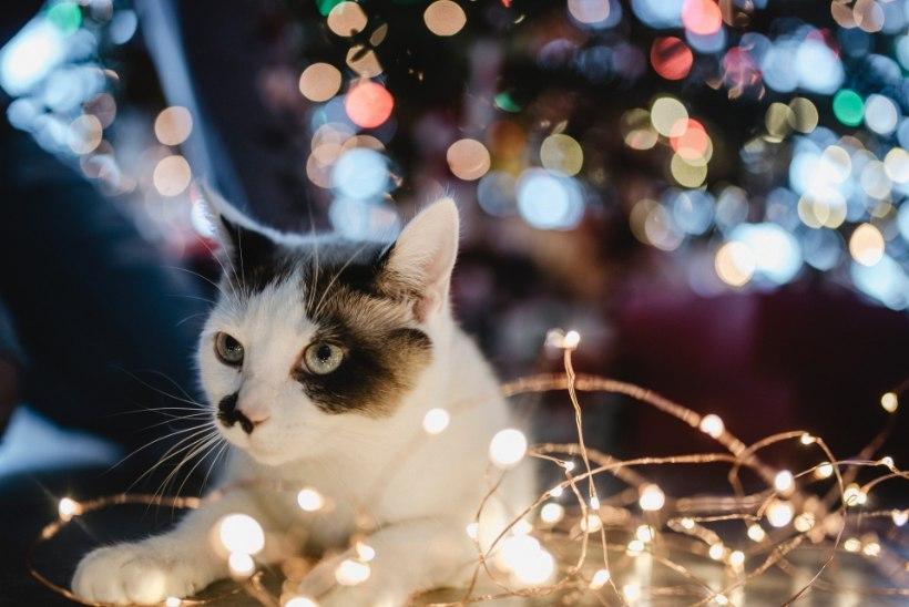 Jõulud on ukse taga! Hästi planeerides tuleb jõulukuu rahulik