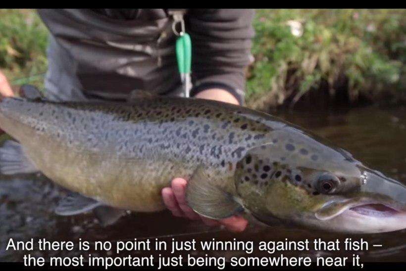 VIDEO: Salmon run in Lithuania