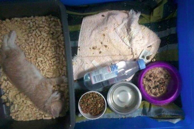 KOHUTAVAD KAADRID! Endine Tallinna loomade varjupaiga töötaja avaldas pildimaterjali, mis paljastab närused tingimused varjupaigas