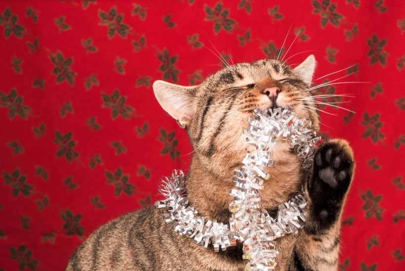 HEA NIPP: vaata, kuidas kassi käest jõulupuu päästa!