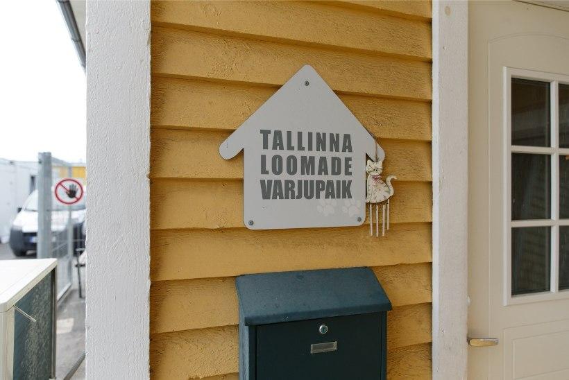 Tallinna Keskkonnaamet ja VTA Tallinna loomade varjupaigas rikkumisi ei tuvastanud