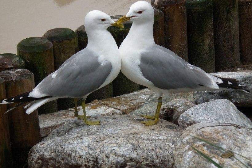 Mida on meil õppida lindude abieludest?