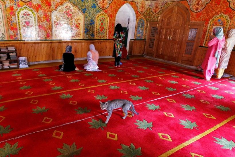 ISEGI MOŠEES: mosleminaisedki võitlevad ahistajate vastu