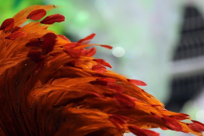 VIDEO | Sambatantsija stringid pudenesid keset karnevaliparaadi jalast
