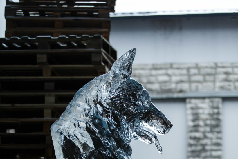 ÕL VIDEO JA FOTOD | Jääskulptuurid tervitavad koera-aastat