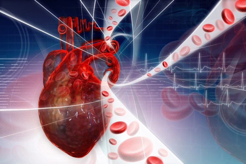Kuidas hoida veresooni?