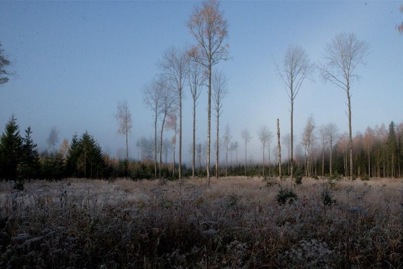Huvigruppide ootused metsanduse arengukavale on üksteisest väga kaugel