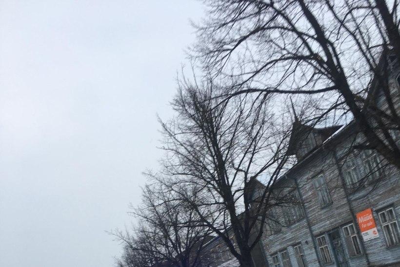 FOTOUUDIS   Politsei võttis Pärnu tänaval kinni julmades peksmistes kahtlustatava mehe