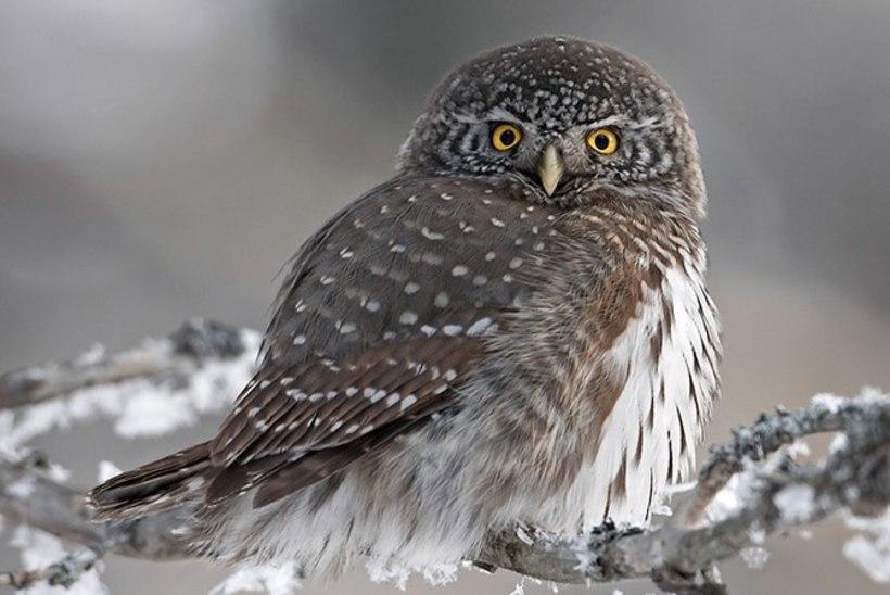 FOTOD | Haruldase linnu pesitsusala raiuti lagedaks, keskkonnaameti sõnul see linde ei ohusta