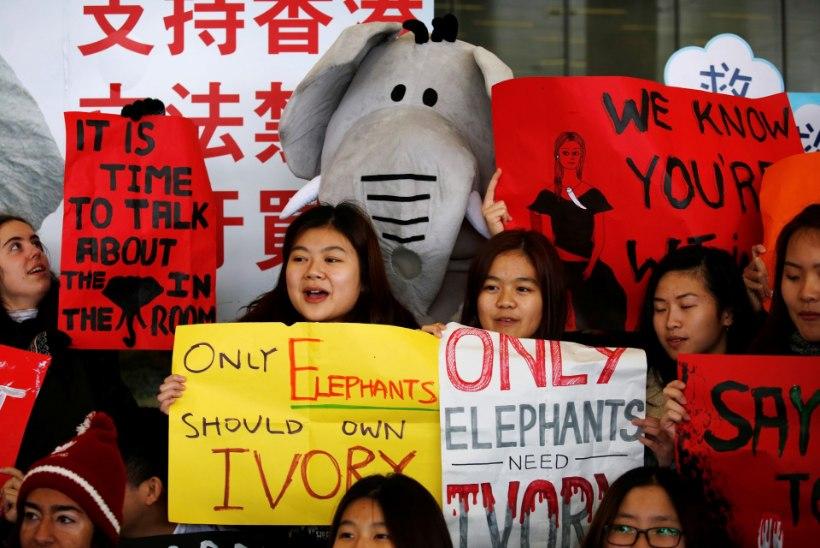 Hongkong keelustas elevandiluuäri