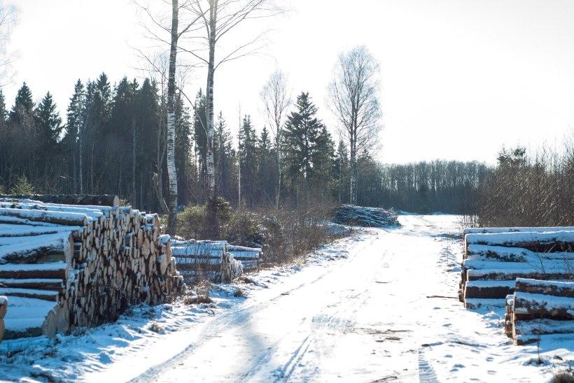 Vakra: koostöö Euroopa metsainstituudiga aitab kaasa Eesti metsade kaitsele
