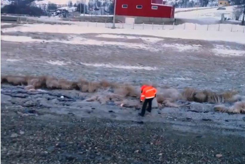Plastikjäätmed on jõudnud Arktika puutumata loodusesse