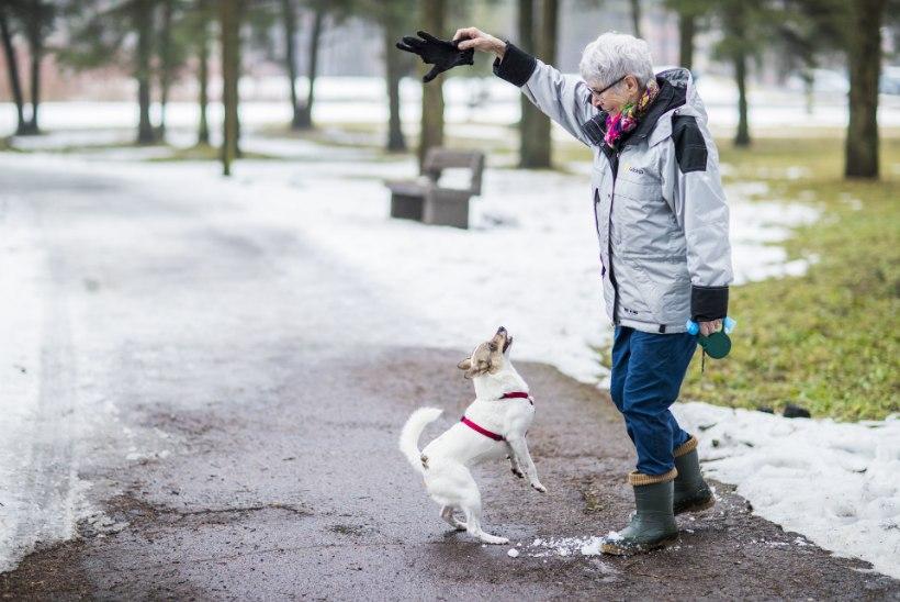 Kas eakas inimene ikka tohib võtta endale kassipoja või koerakutsika?