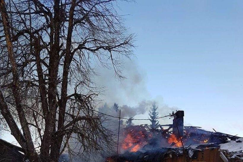 GALERII  ja VIDEO | Põrgu-Paul üritas põlevasse majja tagasi tormata: hambad ja dokumendid jäid sisse!