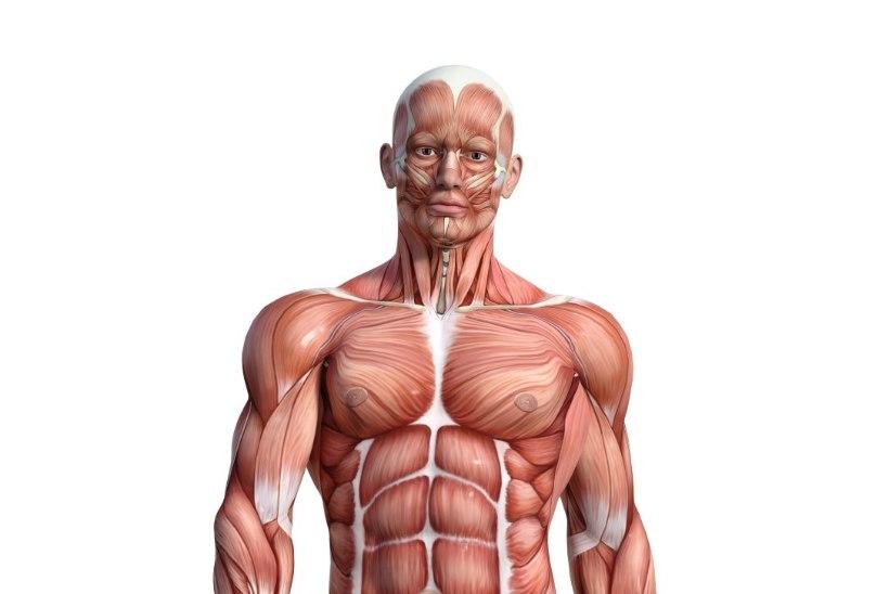 IMELINE KEHA: kuus viisi, kuidas keha end ise tervendab