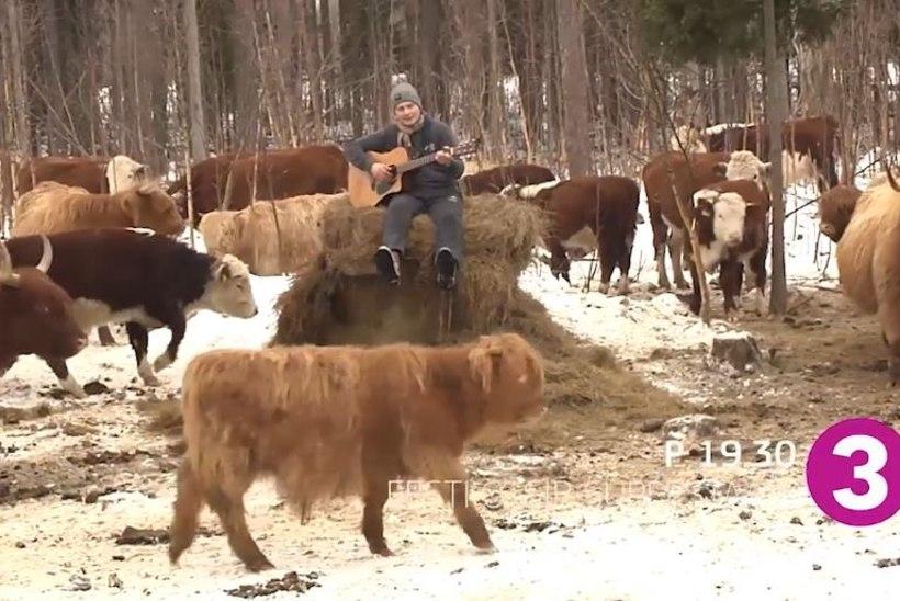 VIDEOD   Superstaarikandidaat Uudo Sepp loob laule kõigest, ka partidest ja veistest!
