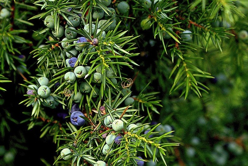 Ravimtaime tarkus! Milliseid taimi märtsis korjata?