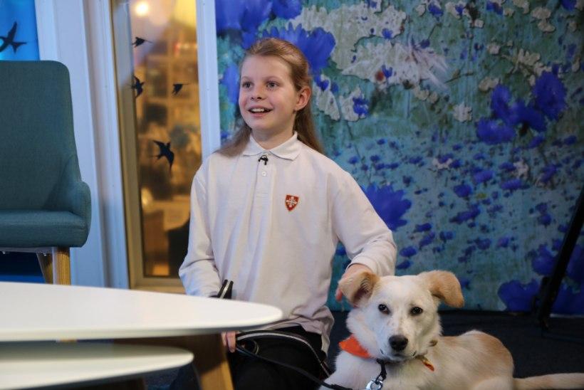 VIDEO   Vinge eeskuju! 11-aastane Eva-Lotta annetas oma raha loomadele