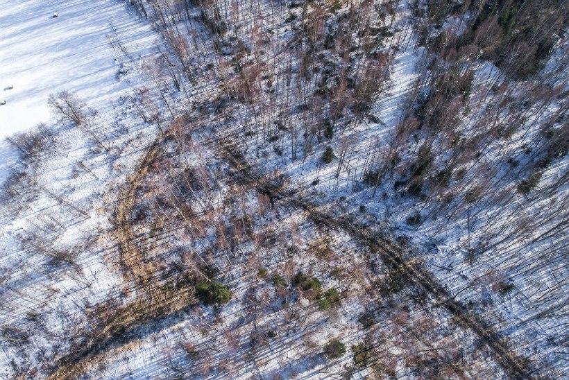 DROONIFOTO   Aktivistid nõuavad rahvuspargi südames raietööde viivitamatut peatamist ja auditit
