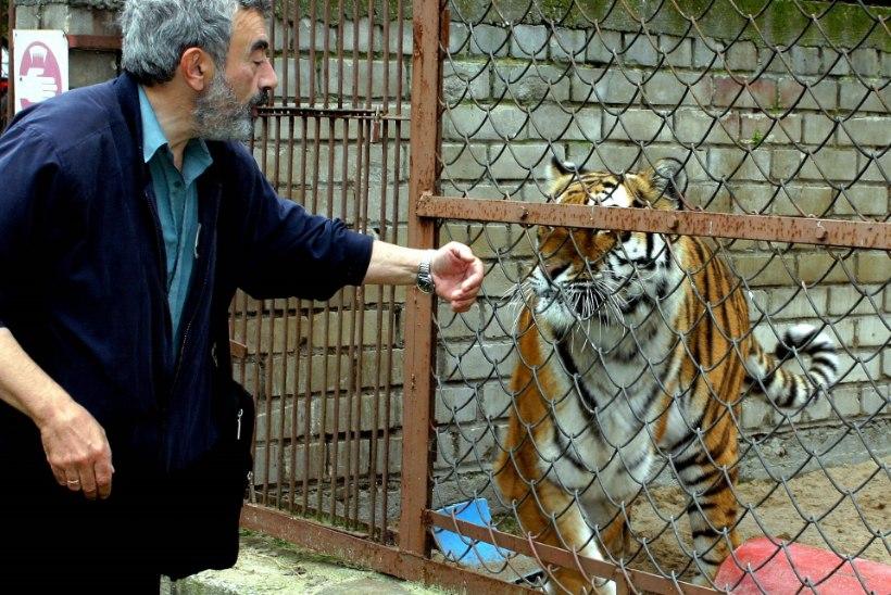 ALEKSEI TUROVSKI meenutab juhtumit, kus tiiger hoidis tal kaks tundi ümbert jala kinni